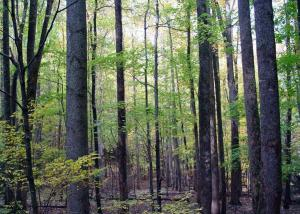 Mixed Hardwoods
