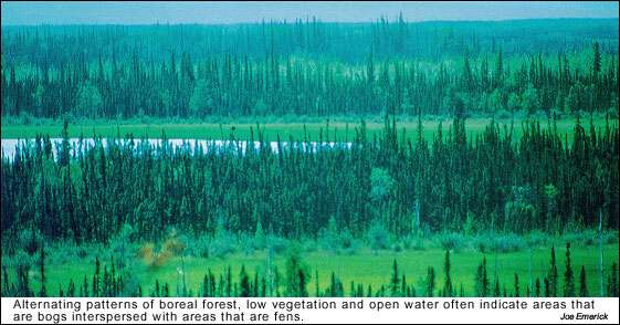 Alternating patterns of boreal forest