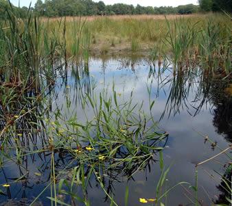 Puddle Ponds